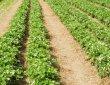 Испански работодател търси 450 българи за ягодоберачи
